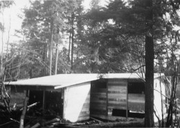 Partially completed wooden structure with trees surrounding.