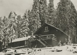 "Large log cabin with lettering that says ""Noseeums"" across its front, snow-covered trees in the background."