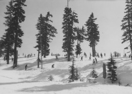 Landscape panorama showing many people skiing with large trees around them.