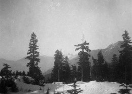 Mountain landscape with trees and snow.