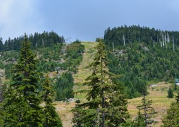 Ski slopes and a chairlift during summer, surrounded by trees.